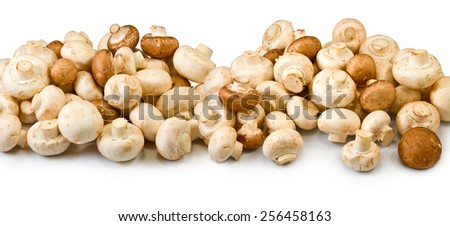 Isolated image of many mushrooms on a white background closeup - stock photo