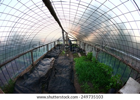 isolated interior the greenhouse with greens in the garden in spring - stock photo