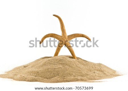 isolated marine star on white - stock photo