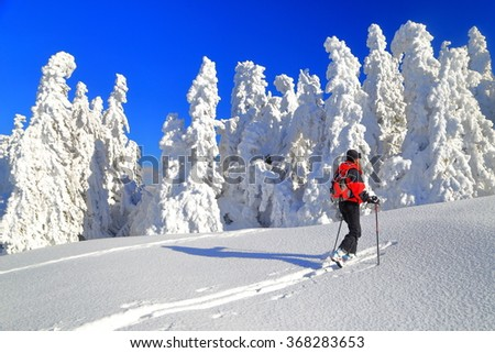 Isolated mountaineer ascending on touring skis between snow covered trees  - stock photo