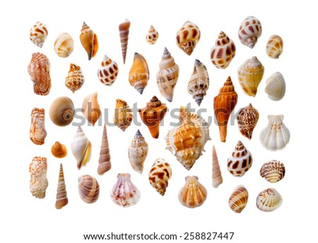 Isolated objects: assorted seashells, isolated on white background - stock photo