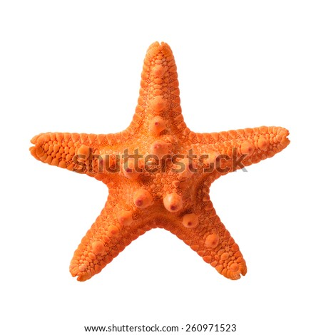 Isolated objects: orange starfish, isolated on white background, closeup shot - stock photo
