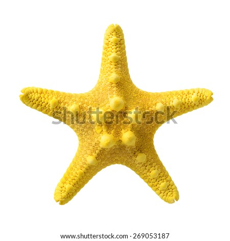 Isolated objects: yellow starfish, isolated on white background, closeup shot - stock photo