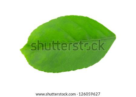 isolated on white background - stock photo