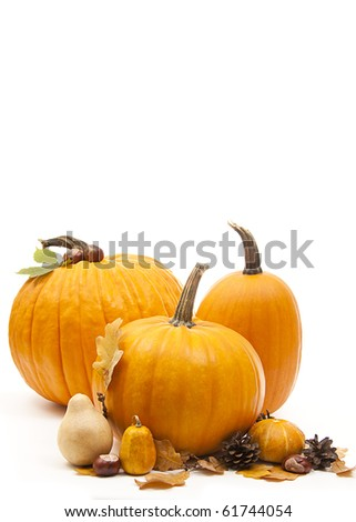 isolated orange pumpkins with chesnuts for halloween - stock photo