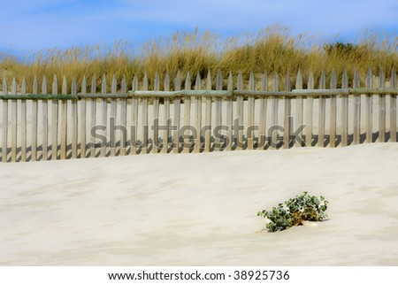 isolated plant on the beach, natural surroundings - stock photo