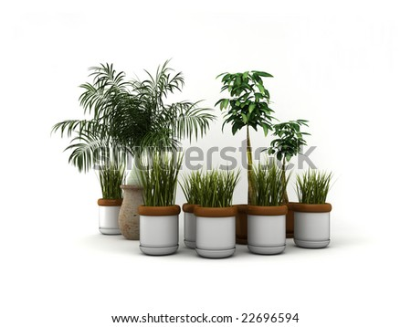 Isolated plants - stock photo