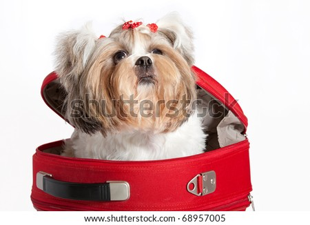 Isolated portrait of a funny dog in a bag - stock photo