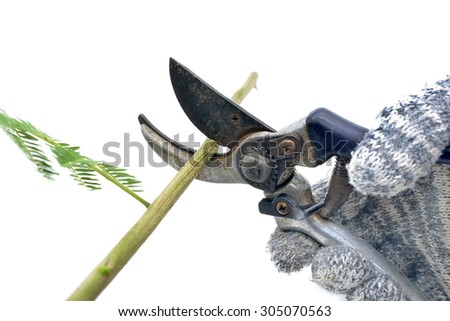 Isolated pruning shears cuts a branch - stock photo