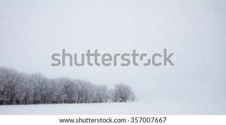 Isolated row of snowy trees against a solid white background - stock photo