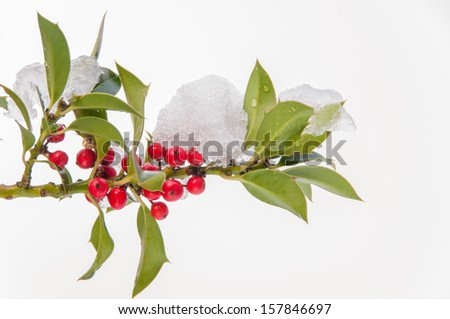 Isolated snow covered holly twig with red berries - stock photo