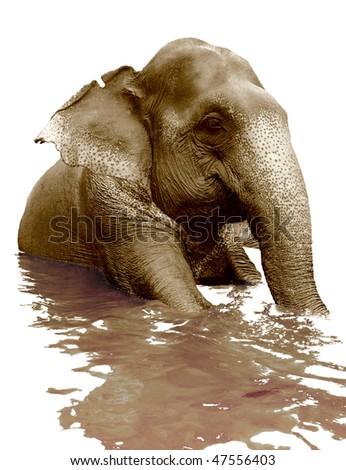 isolated swimming indian elephant (sepia photo) - stock photo