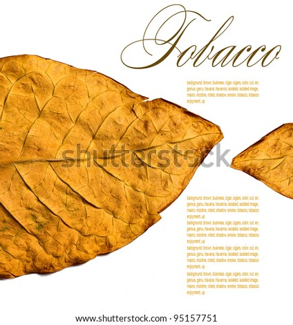 isolated tobacco leaves on a white background - stock photo