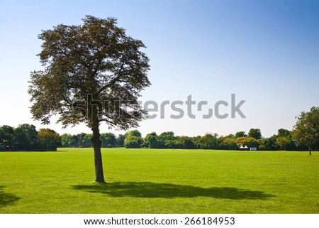 Isolated tree in a green meadow with copy space - stock photo
