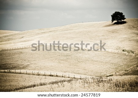 Isolated Tree in Desolate Landscape - stock photo