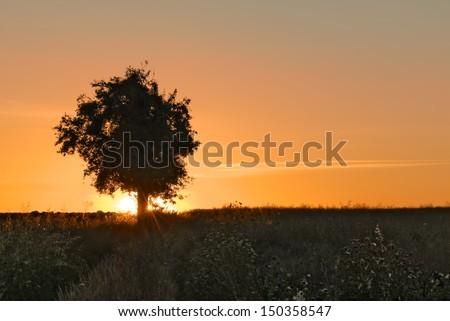 isolated tree,sunrise in the background - stock photo