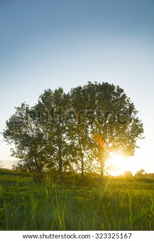 Isolated trees on the horizon, when seen against the light of sunset - stock photo