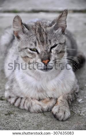 Istanbul grey tabby stray cat portrait - stock photo