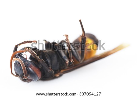 It is Dead wasp isolated on a white. - stock photo