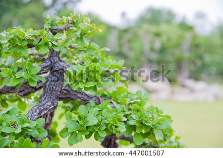 It is Trunk of bonsai for pattern. - stock photo