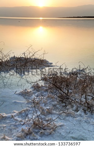 It's dawn at the famous Dead Sea in Israel. Salt clusters grouped on withered bushes break the orange hues reflected in the shallow waters. In the background the sun rises behind the Edom mountains. - stock photo