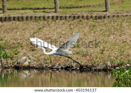 It was fished crayfish egret - stock photo