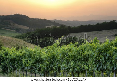 Italian Chianti wine grapes at sunset landscape with HDR edit - stock photo