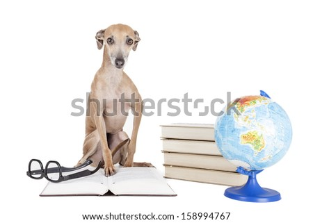 Italian greyhound with books and globe - stock photo