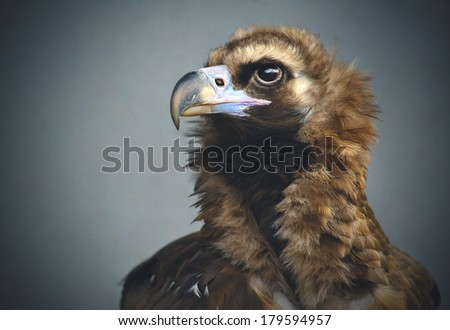 its nature is constant surveillance and search of prey, it is an important, serious, is proud of its field - stock photo