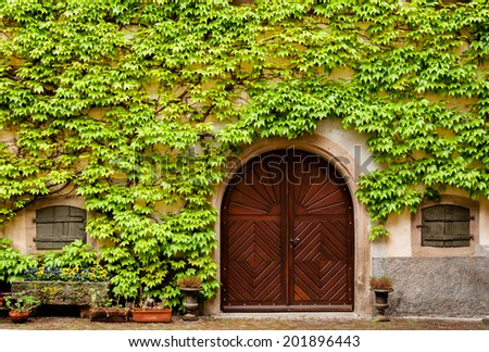 Ivy growning on a wall of a house in Alsace France. - stock photo