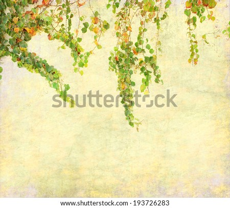 ivy on old grunge antique paper texture - stock photo