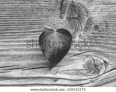 ivyleaf in heart form on a board, black and white - stock photo