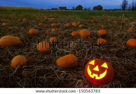 jack-o-lantern in pumpkin patch - stock photo