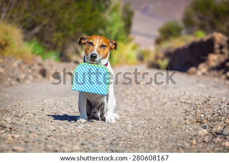jack russell dog abandoned and left all alone on the road or street, with luggage bag or suitcase, begging to come home to owners - stock photo
