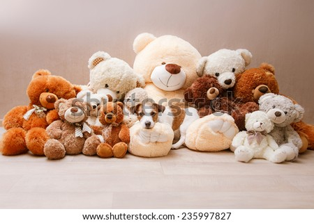 Jack Russell dog and Teddy Bear - stock photo