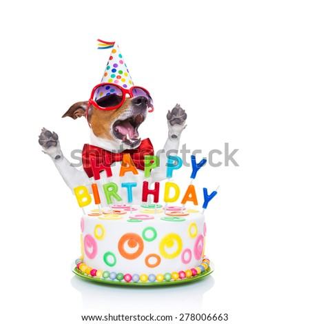jack russell dog  as a surprise, singing birthday song  ,behind funny cake,  wearing  red tie and party hat  , isolated on white background - stock photo