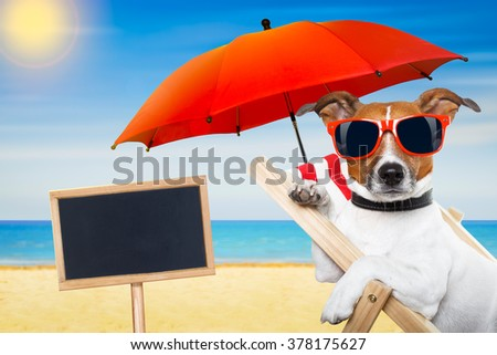 jack russell dog at the beach on a hammock ,  relaxing on summer vacation holidays, with placard or blackboard, ocean shore and sun as background - stock photo
