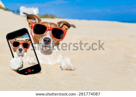 jack russell dog  buried in the sand at the beach on summer vacation holidays , taking a selfie, wearing red sunglasses - stock photo