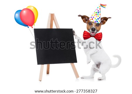 jack russell dog holding a empty blank blackboard or placard,, red tie and party hat on , isolated on white background - stock photo