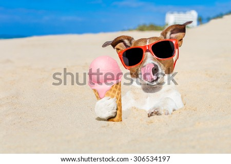 jack russell dog licking ice cream with tongue buried in sand  at the ocean beach in summer vacation holidays, wearing red funny  sunglasses - stock photo
