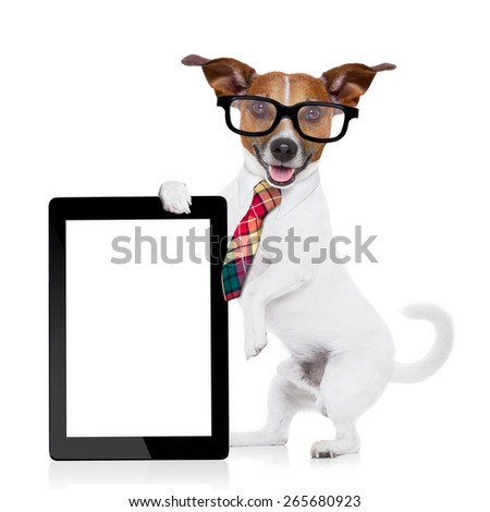 jack russell dog office worker with tie, black glasses holding a tablet pc computer laptop,  isolated on white background - stock photo