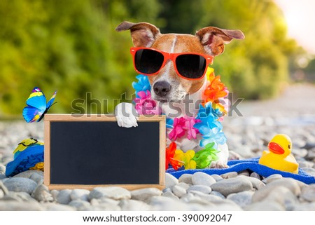 jack russell dog on summer vacation holidays at the river, rubber duck and placard or blackboard included - stock photo