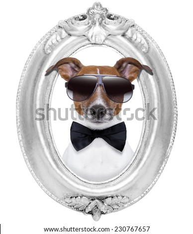 jack russell dog portrait in a wooden retro old frame , isolated on white background - stock photo
