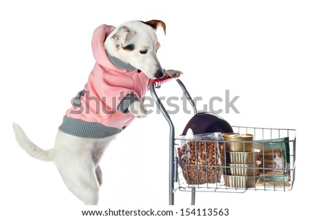 Jack Russell dog pushing a shopping cart full of food  on white background - stock photo