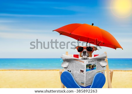 jack russell dog reading newspaper on a beach chair or hammock  with sunglasses under umbrella , on summer vacation holidays - stock photo