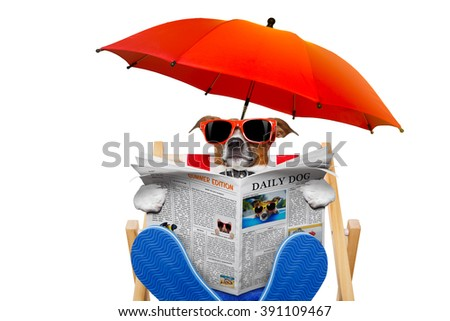 jack russell dog reading newspaper on a beach chair   with sunglasses under umbrella , isolated on white background - stock photo