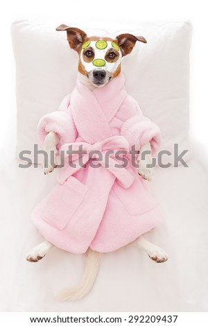 jack russell dog relaxing  and lying, in   spa wellness center ,getting a facial treatment with  moisturizing cream mask and cucumber - stock photo