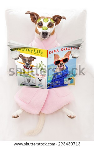 jack russell dog relaxing  and lying, in   spa wellness center ,getting a facial treatment with  moisturizing cream mask and cucumber, while  reading a magazine or newspaper - stock photo