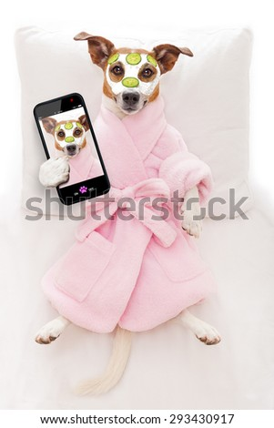 jack russell dog relaxing  and lying, in   spa wellness center ,getting a facial treatment with  moisturizing cream mask and cucumber, while taking a selfie with smartphone - stock photo
