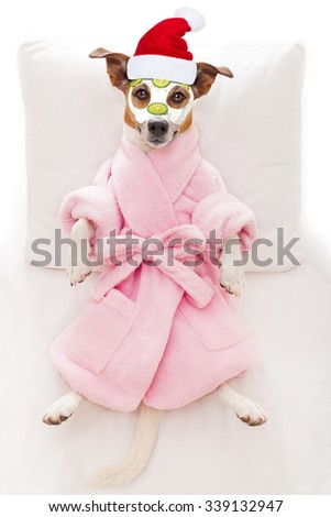 jack russell dog relaxing  and lying, in   spa wellness center ,getting a facial treatment with  moisturizing cream mask and cucumber on christmas holidays - stock photo